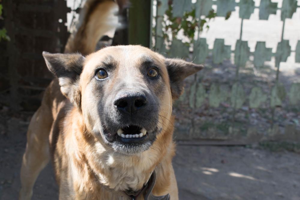 Nevada Animal Liability and Dog Attacks Attorney